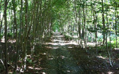 Le Chemin St-Rémi, le Compostelle du Québec